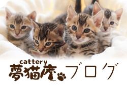 夢猫庵日記 Cattery夢猫庵公式アメブロ