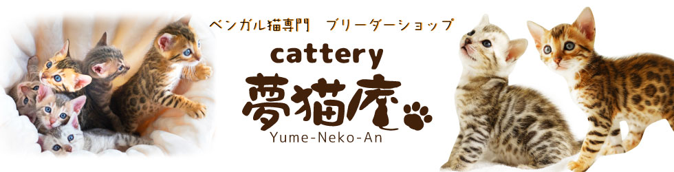 ベンガル猫(ブラウン/シルバー)専門ブリーダー Cattery夢猫庵