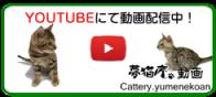 Cattery夢猫庵YOUTUBEチャンネル