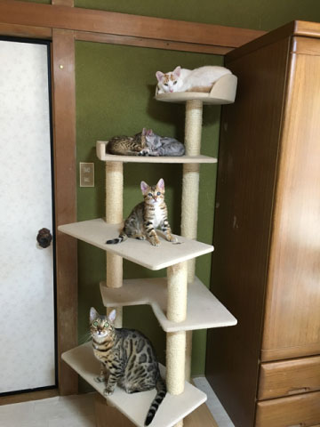Cattery夢猫庵 キャットタワー