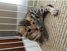 生後20日目の子猫